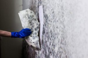 Mold Removal and Prevention on Long Island